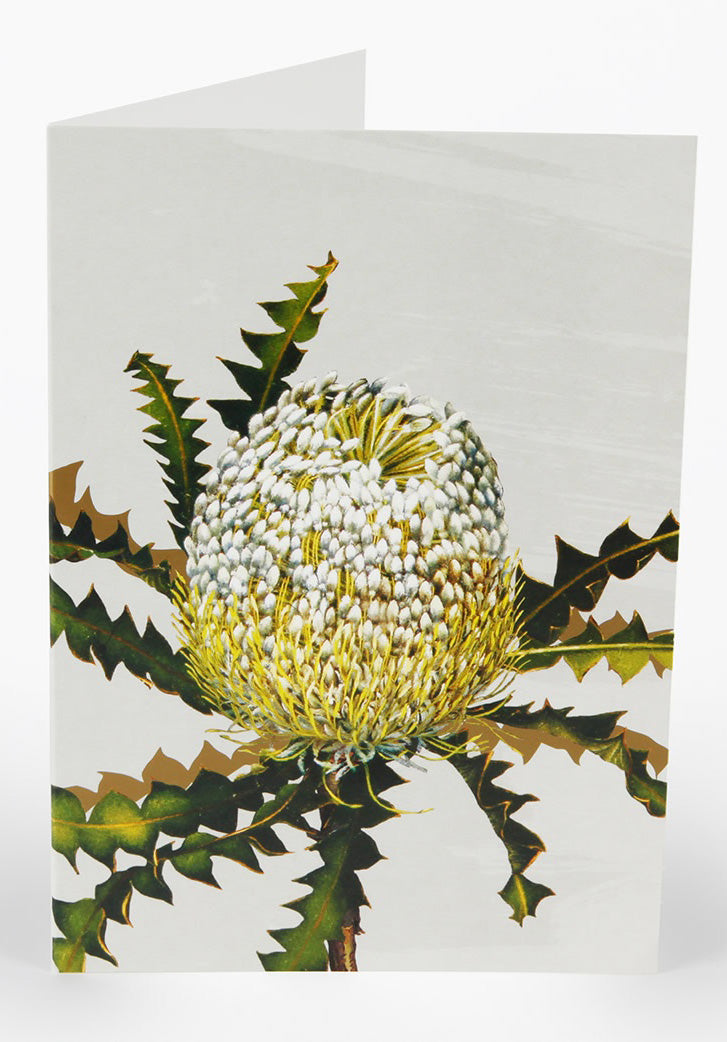 Showy Banksia Greeting Card