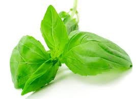 Basil Essential Oil, Essential Oils, Golden's Naturals - Golden's Naturals = quality essential oils at affordable prices