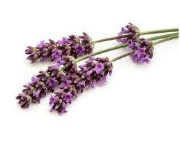 Lavender 40/42% Essential Oil, Essential Oils, Golden's Naturals - Golden's Naturals = quality essential oils at affordable prices