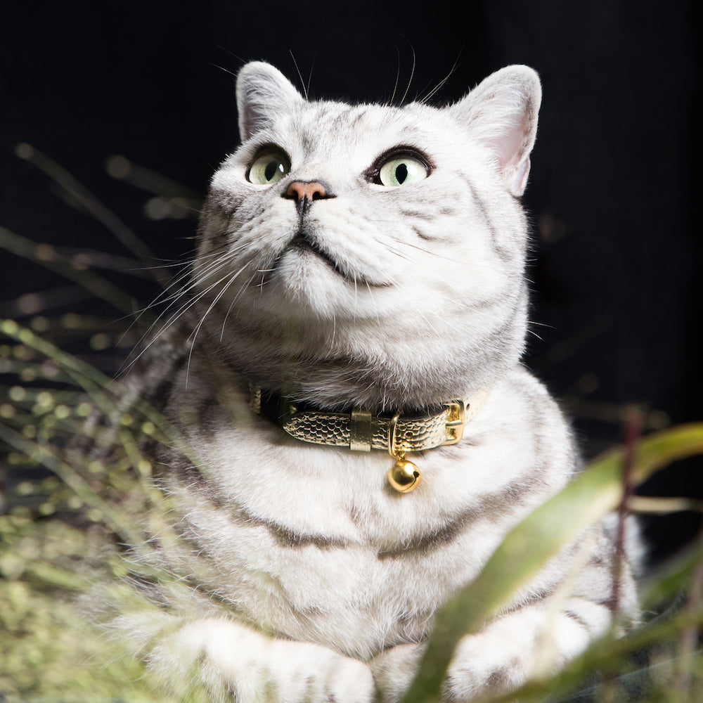 [product _vendor] Caspian Caviar Leather Cat Collar - STYLETAILS