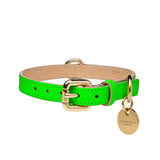 Neon Dog Collar Dogatella