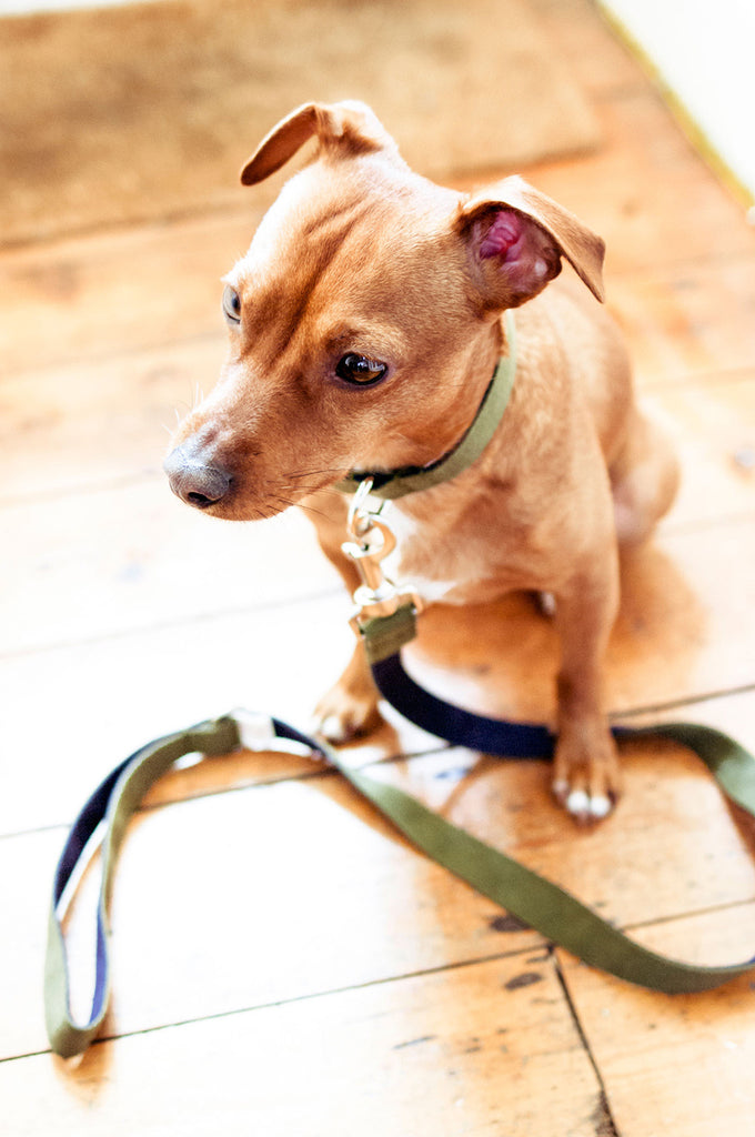 Two-Tone Cotton Dog Lead Vackertass