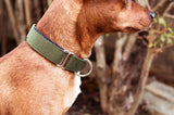 [product _vendor] Two Tone Cotton Webbing Dog Collar - STYLETAILS