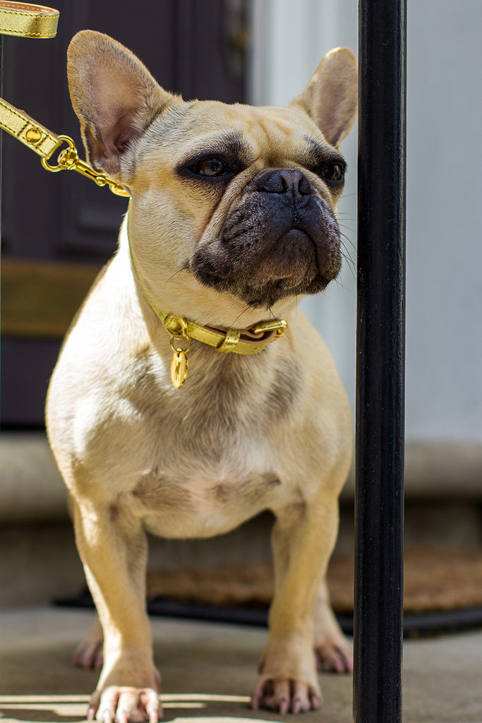 [product _vendor] Metallic Dog Collar - STYLETAILS