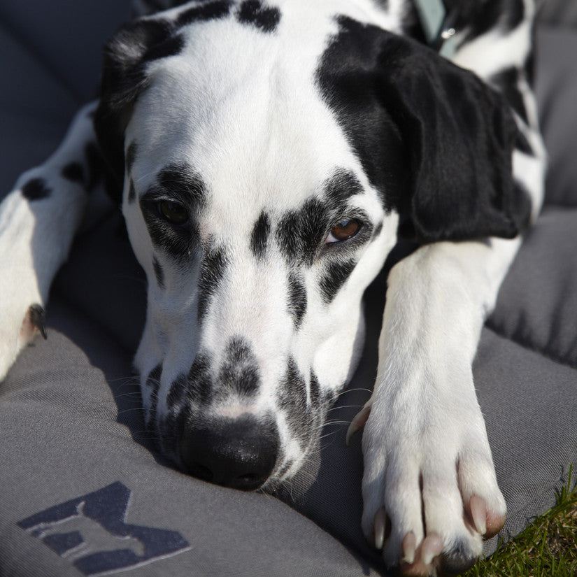 designer dog travel bed MiaCara