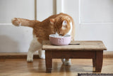 [product _vendor] Tondo Ceramic Cat Bowl - STYLETAILS
