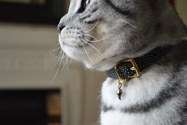 gold cat collar skull charm cheshire and wain