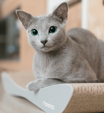 [product _vendor] TOBI Cat Scratcher - Grey - STYLETAILS