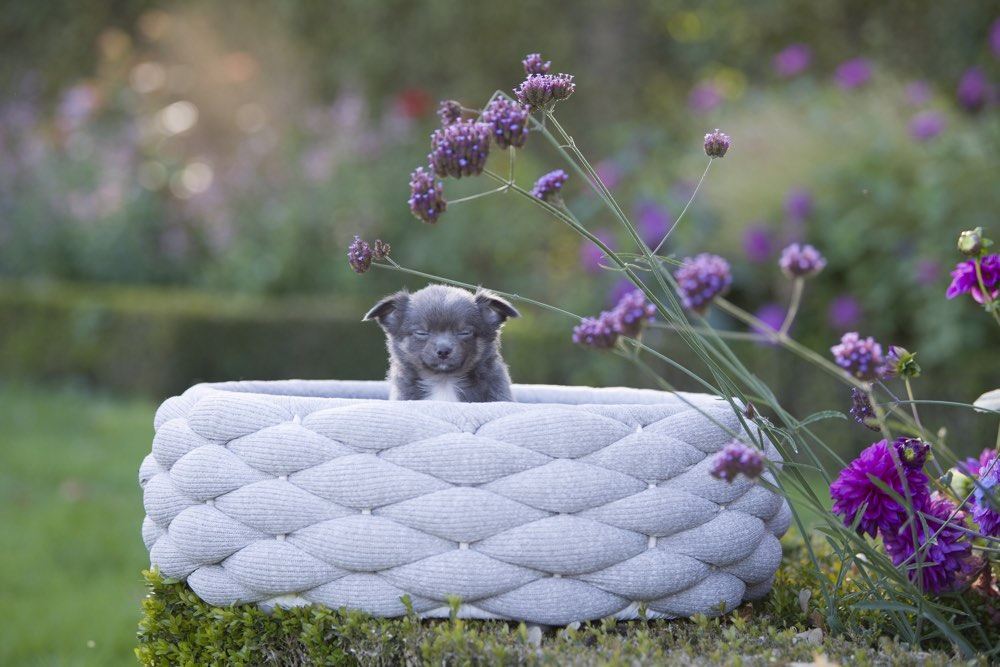 [product _vendor] Riva Dog Bed - Light Grey - STYLETAILS