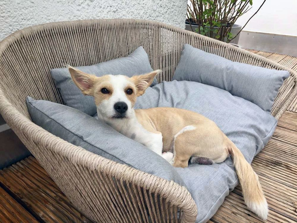 [product _vendor] Vogue Dog Bed - Indoor / Outdoor Cushion - STYLETAILS