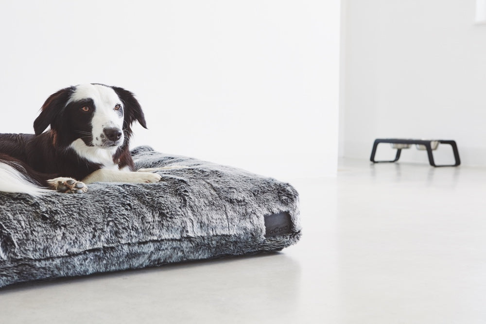 [product _vendor] Felpa Dog Cushion - STYLETAILS
