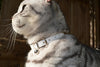 White Rabbit Cat Collar Cheshire Wain