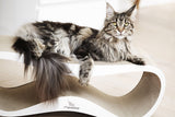 [product _vendor] LUI Cardboard Cat Scratcher Lounge - White - STYLETAILS