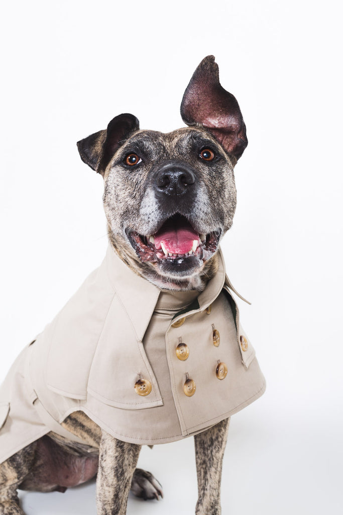 LeeLoo Dog Trench Coat