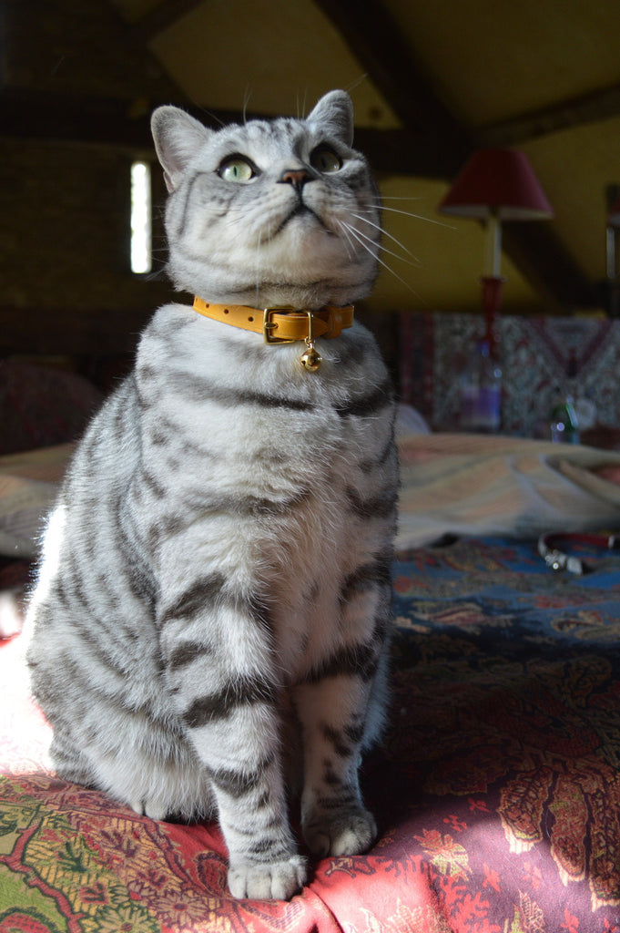 Mango leather cat collar cheshire and wain