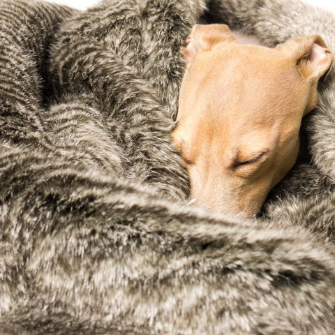 Sherpa Plush Dog Blanket