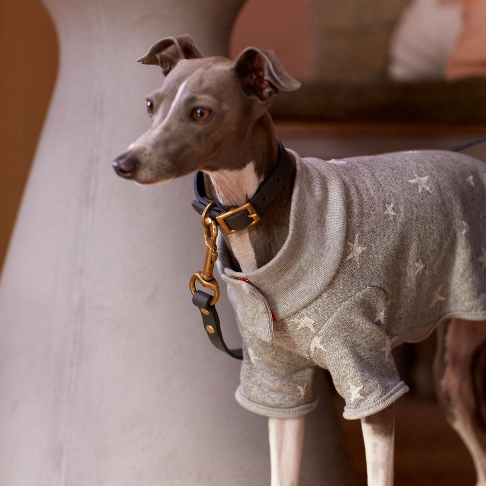 [product _vendor] Festive Star Dog Sweater - Grey - STYLETAILS