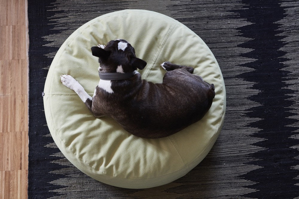 Scala Pouffe Dog Cushion Miacara