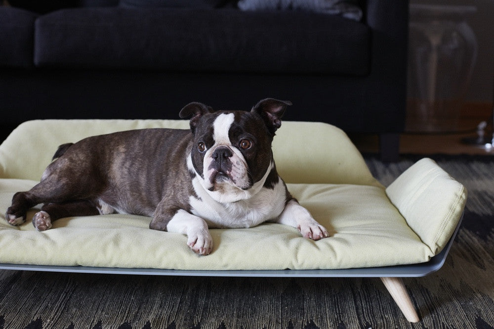 Letto Dog Day Bed