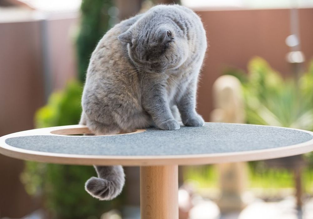 [product _vendor] White Free Standing Cat Tree - STYLETAILS