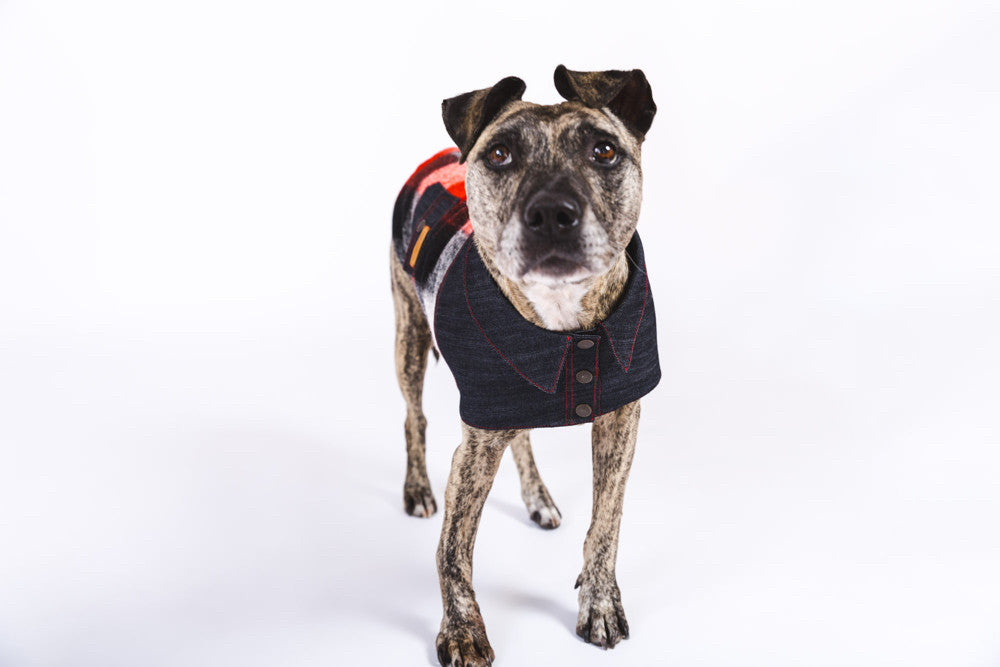 Huck Lumberjack Dog Jacket