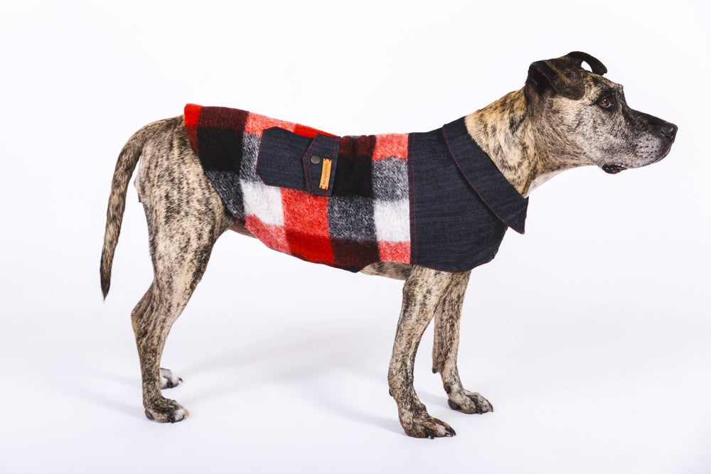 Huck Lumberjack Dog Jacket Happystaffy.me