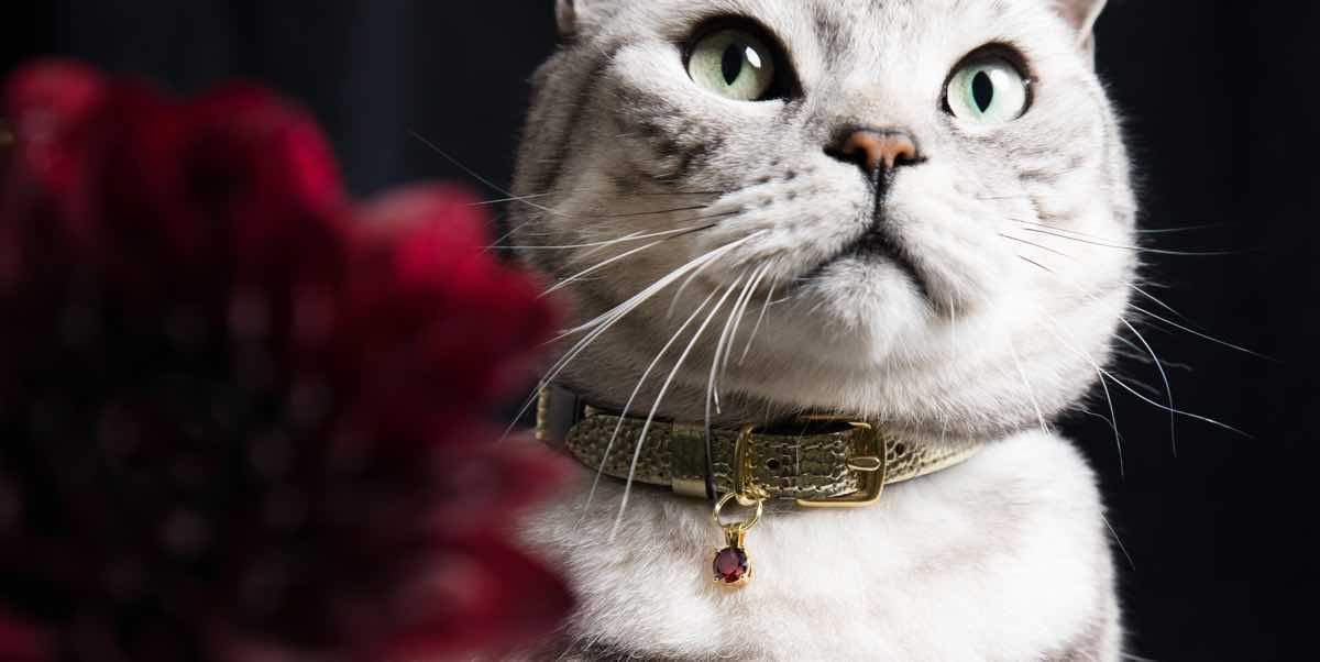 luxury leather cat collars cheshire and wain