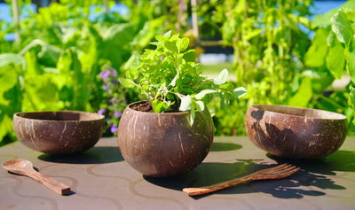 Coconut Bowls make mini herb gardens with Subpod