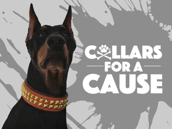 Collars For a Cause