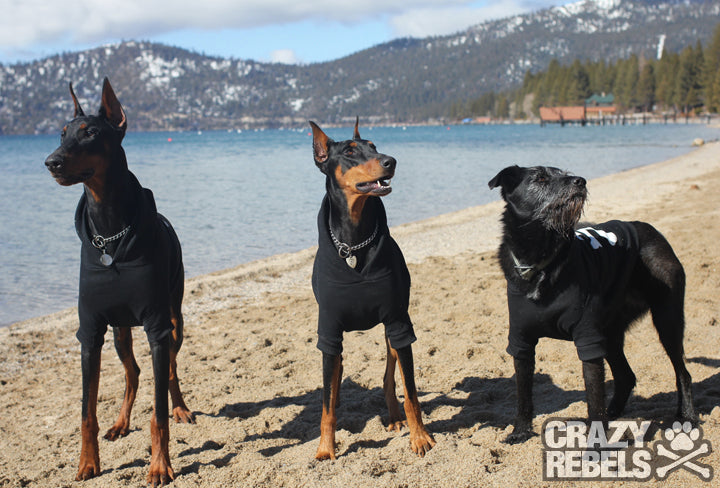 We Recently Returned From A Road Trip Up North To Tahoe Nevada Visit Some Of Our Family And One Very Favorite Dogs Mary Jane