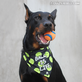 Ball Is Life Bandana Collar