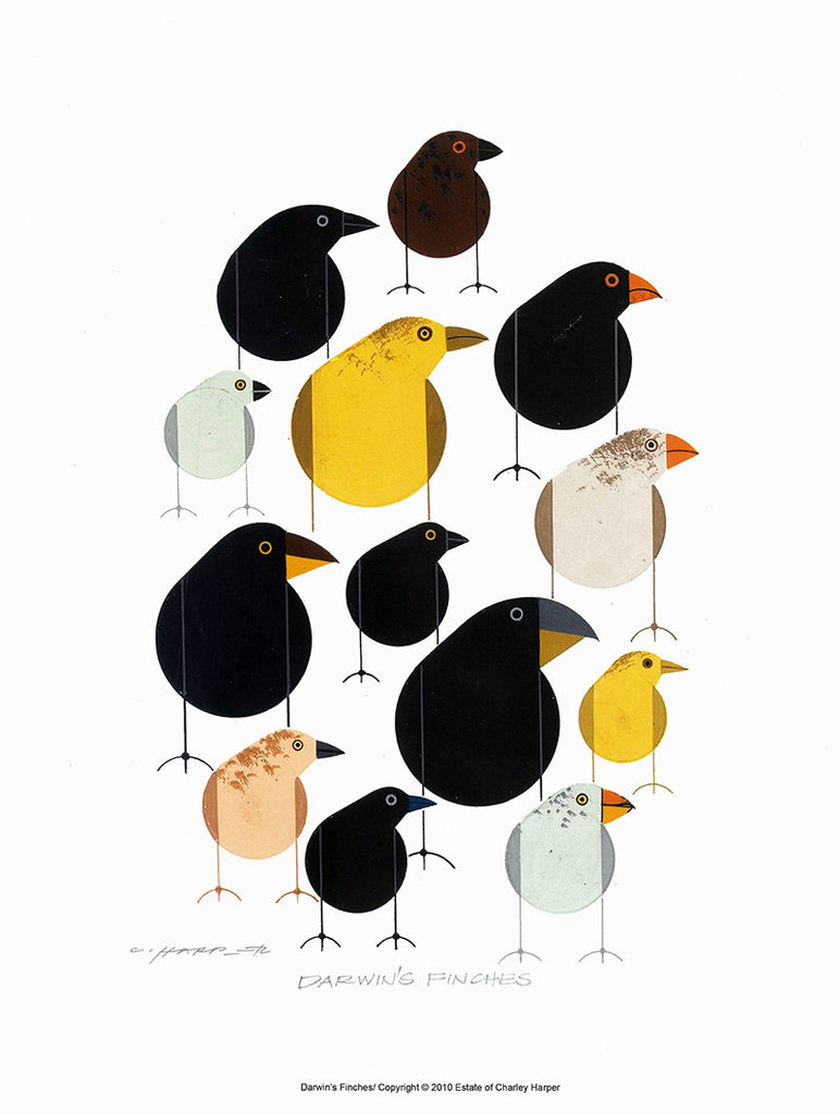 Darwin's Finches Print by Charley Harper