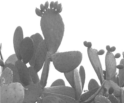cactus-leather-jacket-prickley-pear