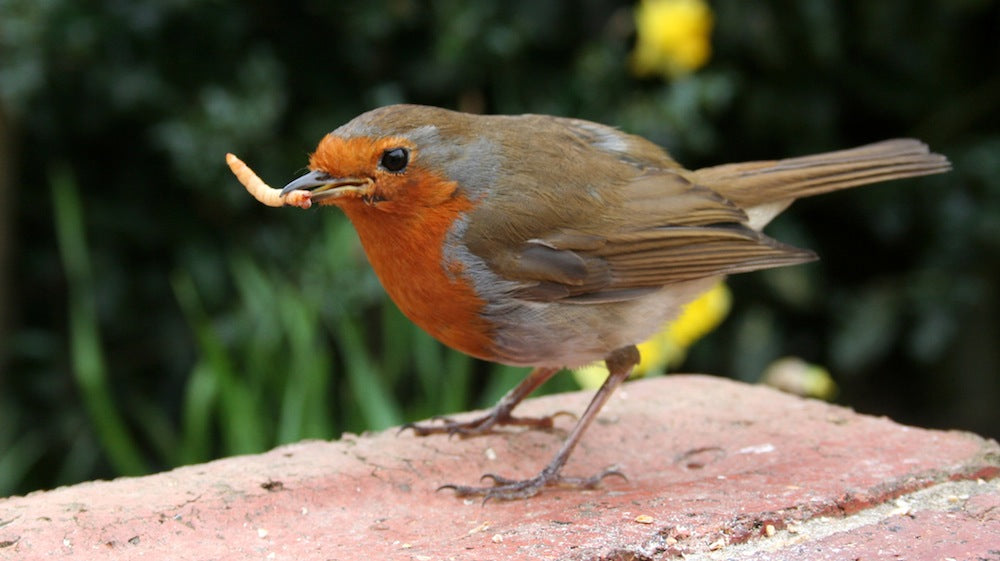 5 Reasons to Buy Cheap Bird Food Online