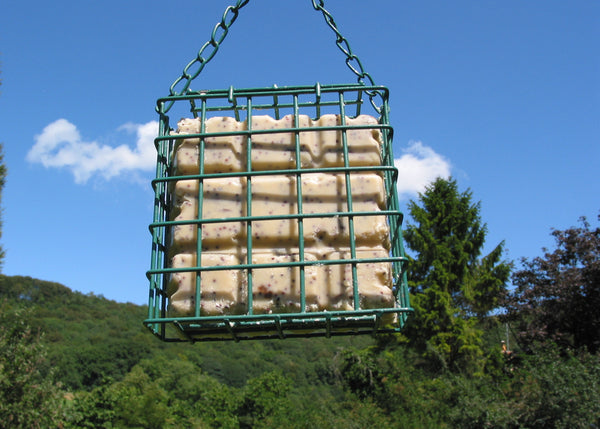 Suet Blocks With Insect.