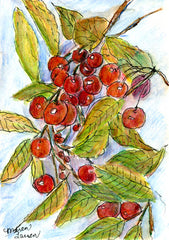 Door County Cherries in Watercolor Pencil