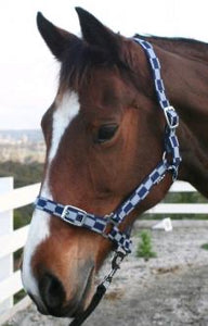 HARRIET CHECK HEADSTALL