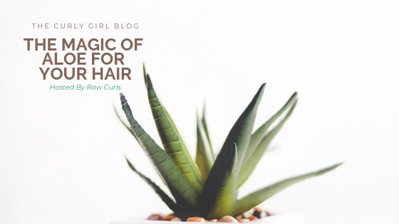 The Magic of Aloe For Your Hair