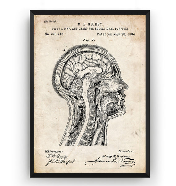 Anatomical Head 1884 Patent Print - Magic Posters