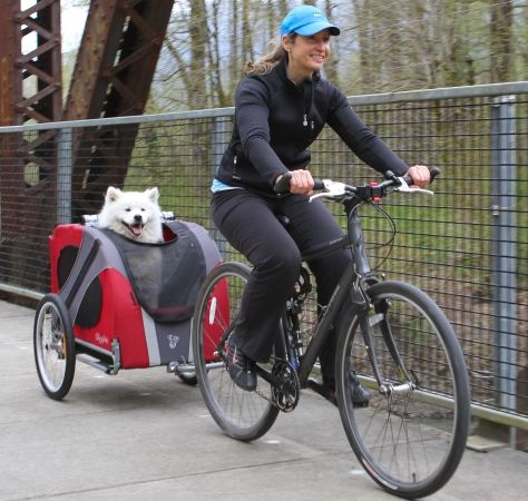 Dog in bicycle trailer