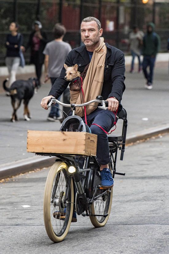 dog in sling on bicycle