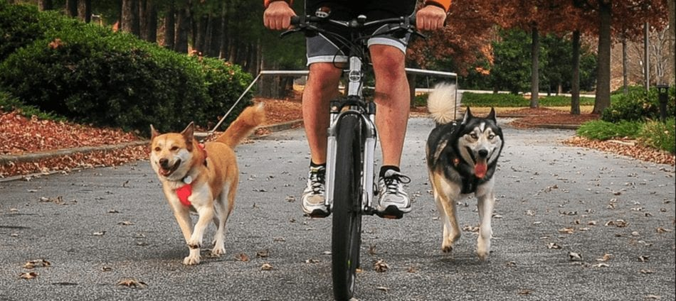 Walky dog bicycle leash