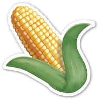 Ear of Maize