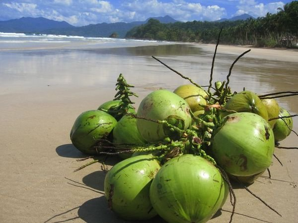 Coconuts Over You