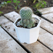 Load image into Gallery viewer, Cactus