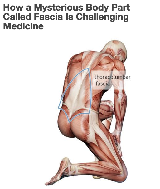 A 'mysterious body part': Fascia challenges Medicine