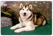 Alaskan Malamute Cutting Board