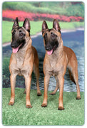 Belgian Malinois Cutting Board