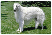Borzoi Cutting Board