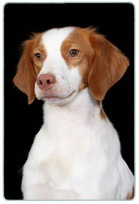 Brittany Spaniel Cutting Board
